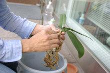 港区赤坂にあるビデオ制作会社のブログ-スタジオ用の植物