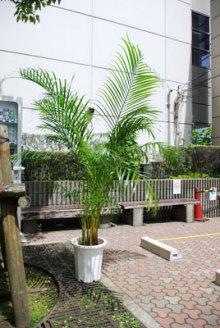港区赤坂にあるビデオ制作会社のブログ-スタジオでよく使う木